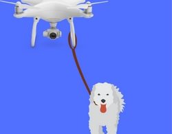 drone walking your dog feature