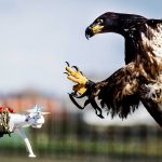 drone catching eagle feature