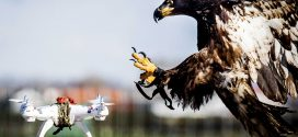 Drone-Catching Eagles are being retired by Dutch Police