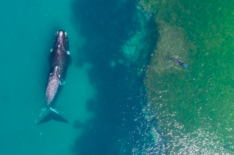 swimming with whales dronestagram