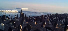 Incredible Drone Footage Shows Hidden Colony of Penguins in Antarctica