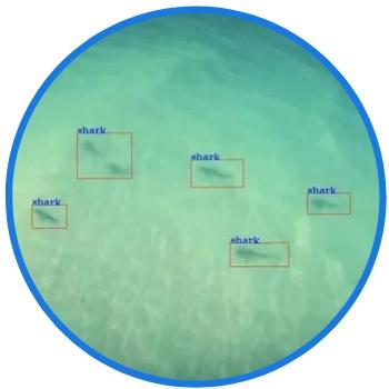 sharkspotter drone system