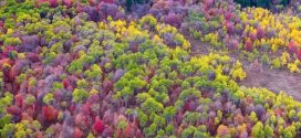 Beautiful Drone Video Shows Autumn From A New Perspective