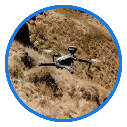 new zealand drone barks to sheeps