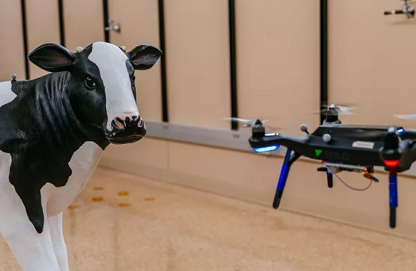 drones recognize cows faces